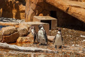 Penguin - Zoo - water — Stock fotografie