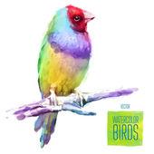 Illustrazione di stile dell'acquerello di vettore dell'uccello. — Vettoriale Stock