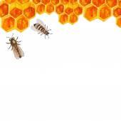 Watercolor honey background — Stock Vector