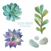 Watercolor succulent set — Stockvektor
