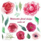 Watercolor peony, ranunculus, anemone, roses — Stock Vector