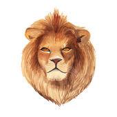 Watercolor lion portrait — Stock Vector