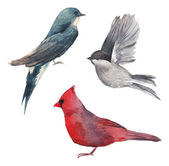 Watercolor bird set — Vetor de Stock