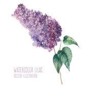 Watercolor lilac branch. — Stock Vector