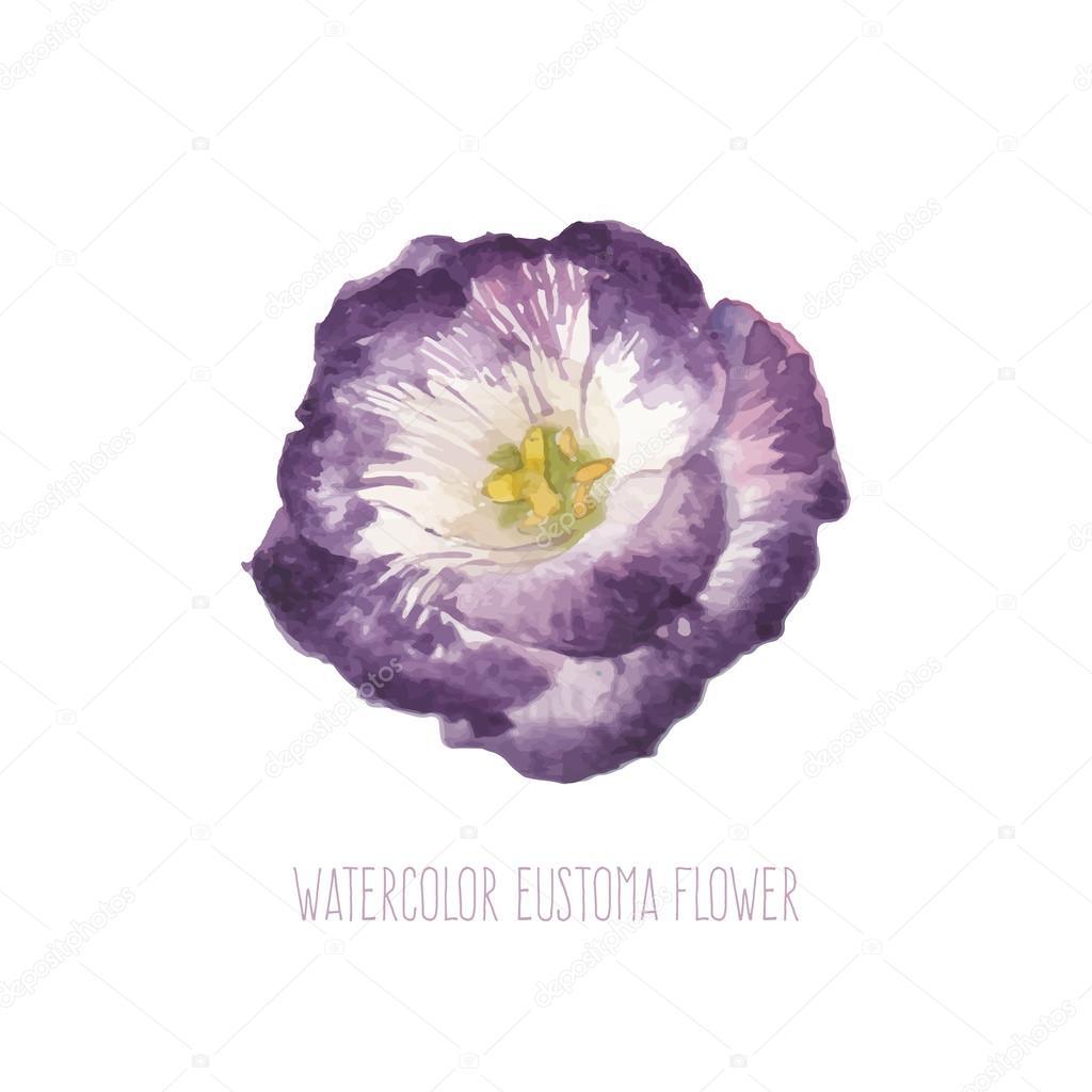 Fleur lisianthus aquarelle image vectorielle 80033230 for Lisianthus art floral