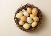 """Eggs in a Nest, """"Nest Egg"""" — Stock Photo"""