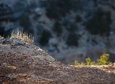 Grand Canyon Sunset, Arizona — Stock Photo
