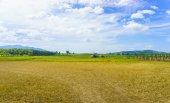 Beautiful field lanscape — Stock Photo