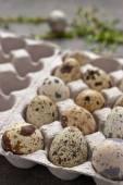 Quail eggs in the cardboard packing on the grey table — Foto de Stock