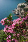 Pink flowers over the bay — Stock Photo
