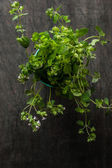 Oregano in a glass  on the old dark wooden table — Stock Photo