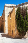 Lone tree on the maltese street — Stock Photo