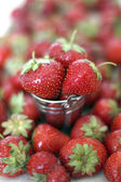 Harvest strawberries in a small bucket — Stockfoto