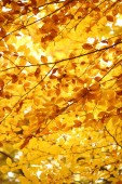 Background - bright colors of autumn — Foto Stock