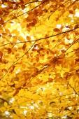 Background - bright colors of autumn — Zdjęcie stockowe