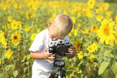 Baby photographer in the field of sunflowers — Stockfoto