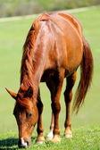 Beautiful  horses on green mountain pasture — Stock Photo