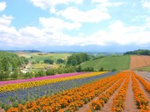 Beautiful flower field on the hill — Stock Photo