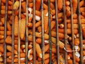 Corn 2 — Stock Photo