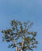 Trees and sky — Stock Photo