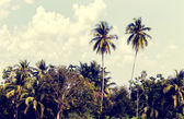 Coconut groves — Stock Photo