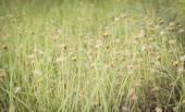 Kwiatów i traw — Zdjęcie stockowe