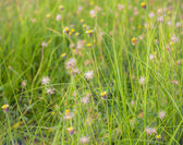Flowers and Grass — Stock Photo
