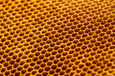 Beautiful honeycomb without honey texture — Stock Photo