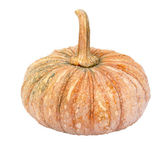 Pumpkin - Cucurbita moschata Decne. - isolated — Stock Photo