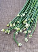 Fresh Onion Flower Stem on brown mat — Stock Photo