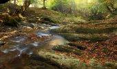 Mountain river in late Autumn — Stock Photo