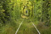 "Tunnel of ""love"" formed by trees in Romania — Fotografia Stock"
