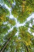 Orman ağaçları. doğa yeşil ahşap güneş ışığı arka — Stok fotoğraf