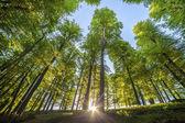 árboles del bosque. fondos de naturaleza madera verde luz del sol — Foto de Stock