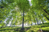 Forest trees. nature green wood sunlight backgrounds — Stock Photo