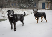 Hungry stray dog during a snowstorm — Stock Photo