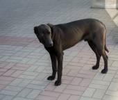 Hungry skinny stray dog — Stock Photo