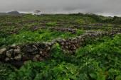 Portugal - Azores - Terceira - Biscoitos — Zdjęcie stockowe