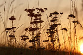 A view of the sunset through the grass — Foto de Stock