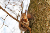 Squirrel sitting on the tree — Stock Photo