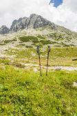Trekking Poles — Stock Photo