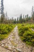 Trail — Stock Photo