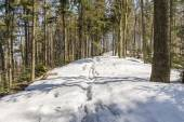 Small snowdrifts on the trail — Stock Photo