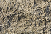Testure carbonate rock — Stock Photo