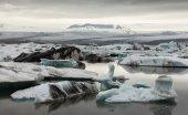 Glacier and icebergs in Iceland — Foto de Stock