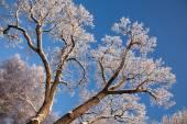 Větev stromu ve sněhu — Stock fotografie