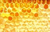 Macro hineycomb com mel — Fotografia Stock