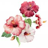 Hibiscus2 — Stock Vector