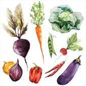 Watercolor drawing of vegetables — Stok Vektör
