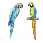 Watercolor parrots painting — Stock Photo